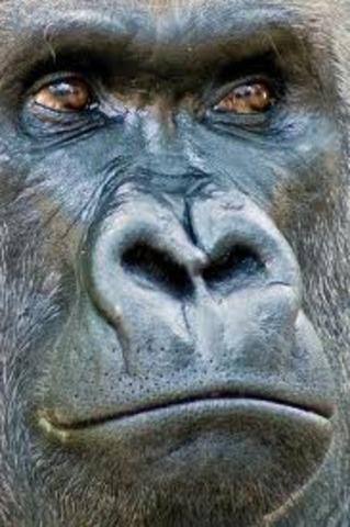 Diferencias con otros primates