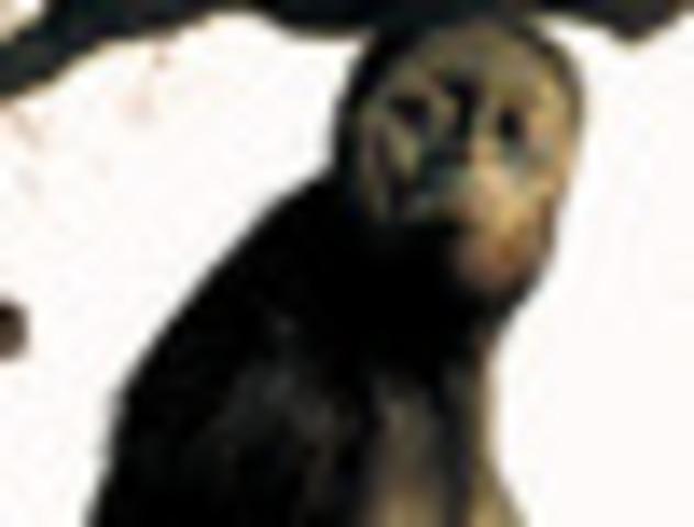 Los Australopithecus Afarensis