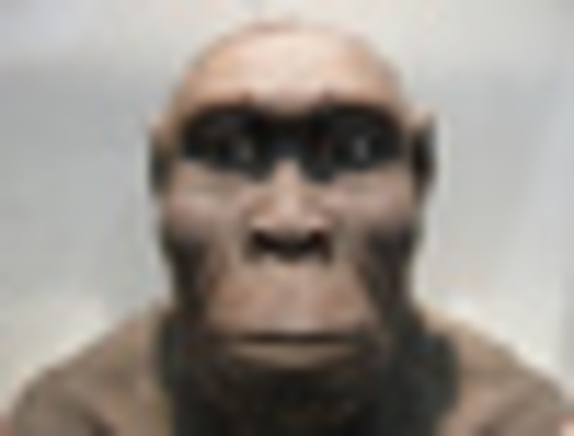 El Homo Rudolfensis