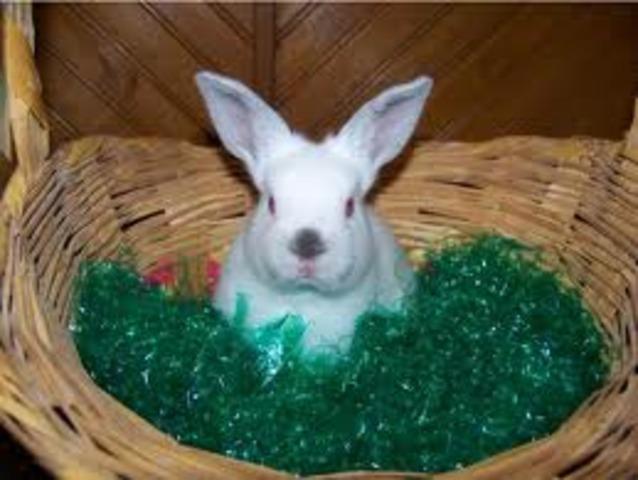 Rabbit Calicivirus Disease Realeased