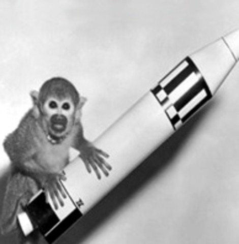 1949 the first animal was sent to space