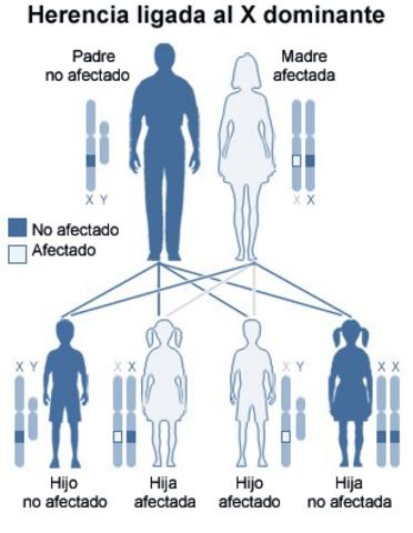 Defectuosos Hereditarios