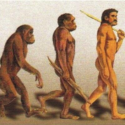 Origen y Evolucion  timeline