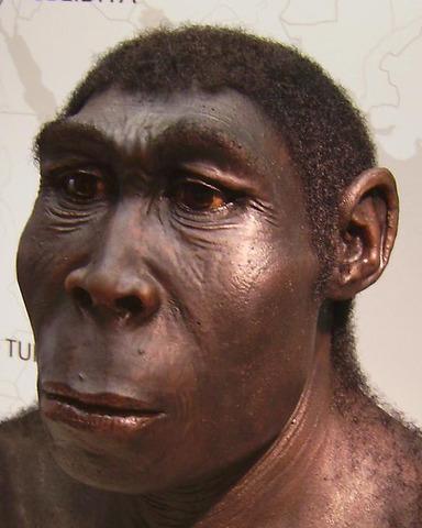Homo Erectus 1891/1892
