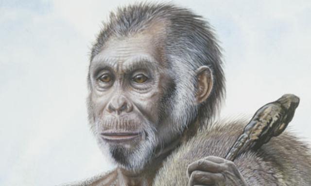 Homo Floresiensis 2003/2004