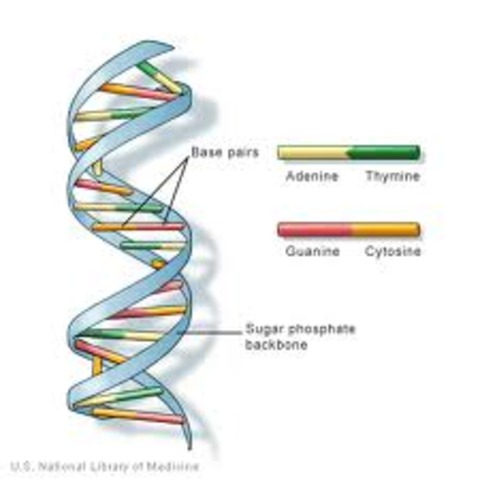Science and technology:  DNA was discovered