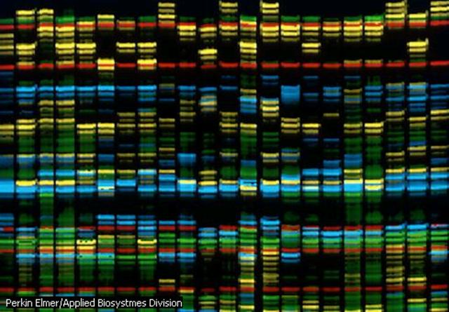 Catalogo de genes humanos