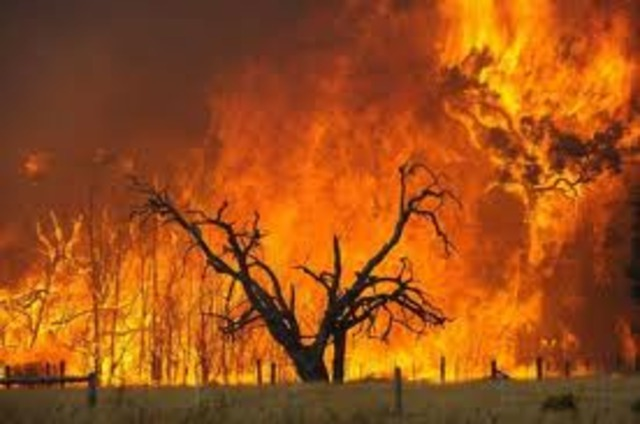 Ash Wednesday bushfires killed 72 people in Victoria