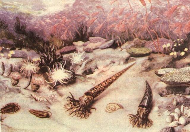 Ordovician Period 505 - 445 Miliion Years Ago