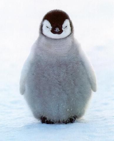 Go to Antartica to see the penguins