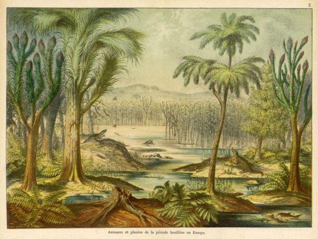 Carboniferous Period 360 - 278 Million Years Ago