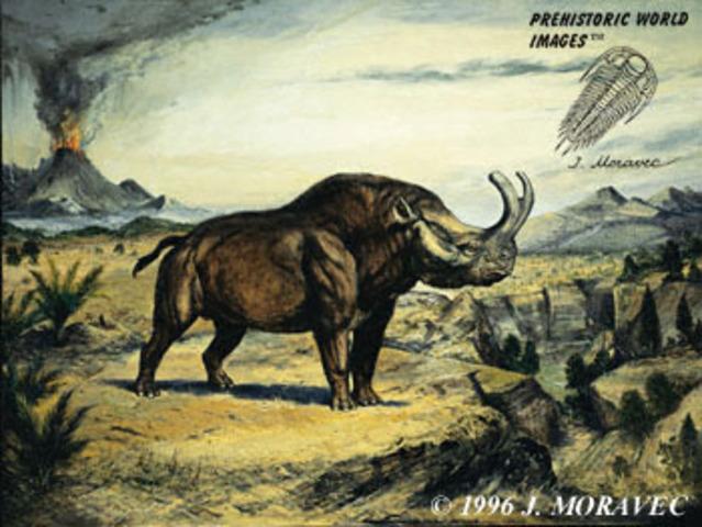 Tertiary Period 67 - 2 Million Years Ago