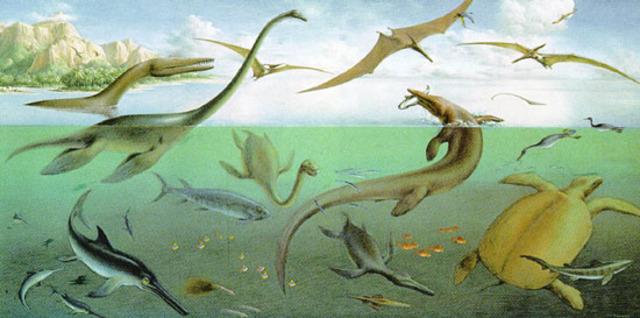Cretaceous Period 144 - 67 Million Years Ago