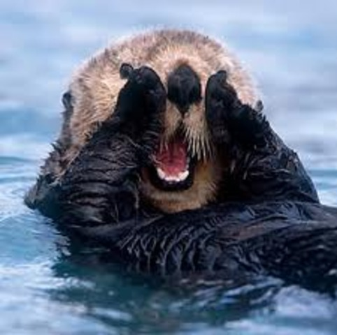 Sea Otter Pelts