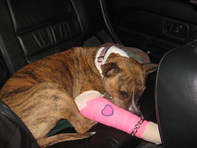 Zoe Breaks a leg...