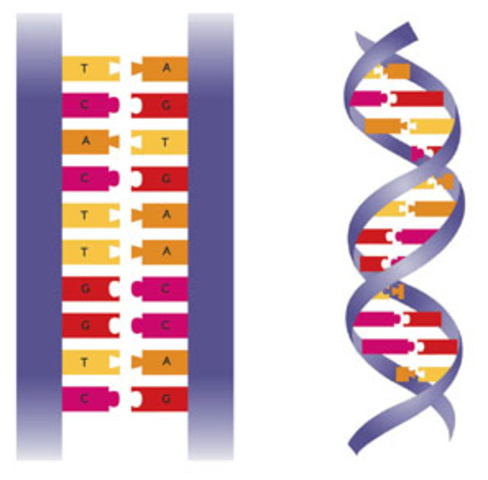 science and technology: dna