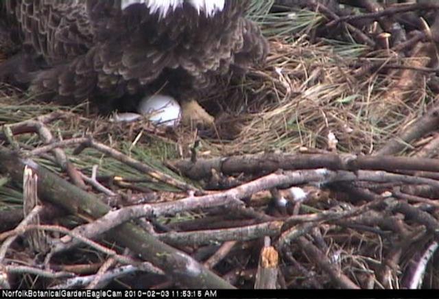 2nd egg laid
