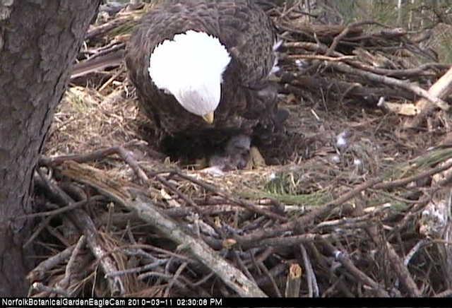 1st egg hatches