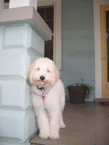 Mi familia consiguió nuestro primer perro, Lizzie.