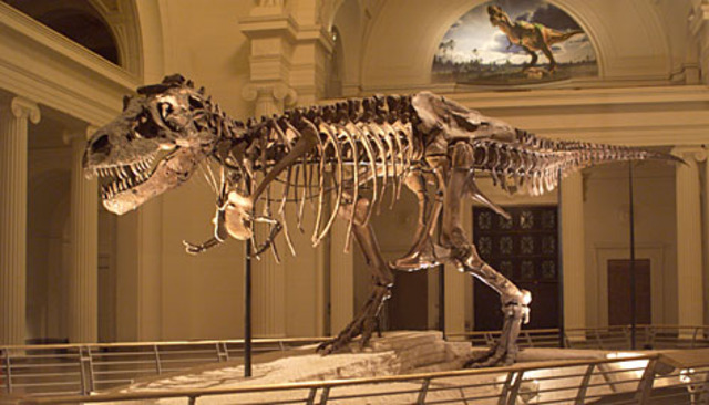 """Science & Technology: Discovery of """"Sue"""" the tyrannosaurus"""