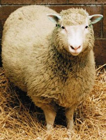 Science & Technology: Cloning Dolly the sheep