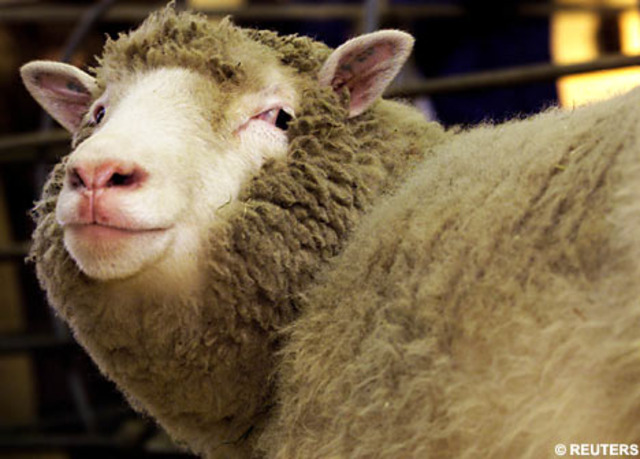 science and technology: sheep cloning