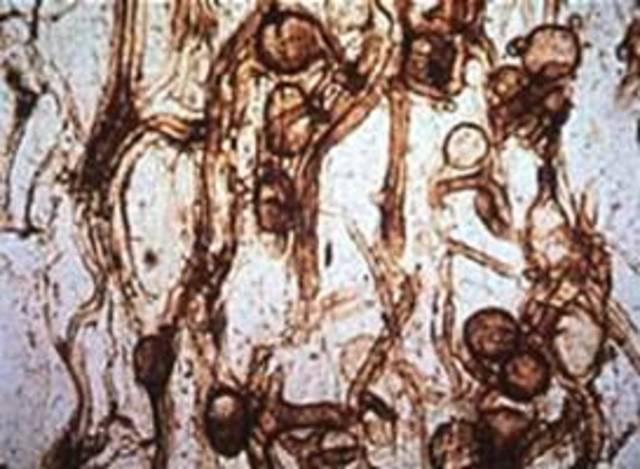 First Fungi Appear - 300 Million Years Ago
