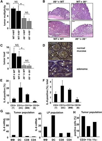 IL-6-Stat3 signaling in colitis-associated cancer