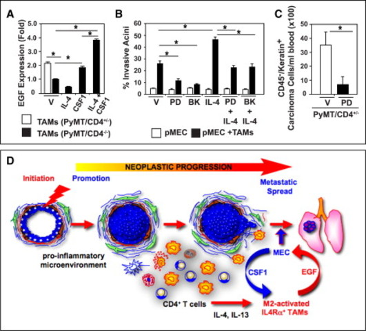 Immune regulation of mammary cancer metastasis