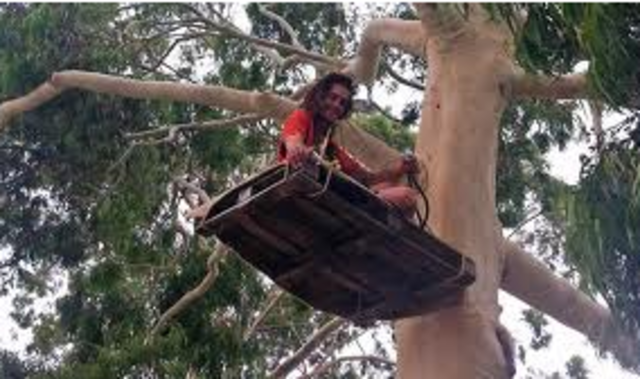 Protester in a tree