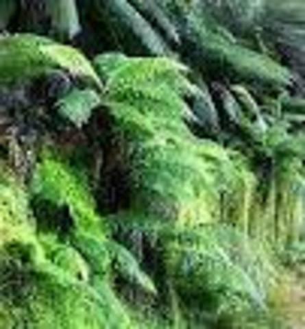 plant life forms 206mya