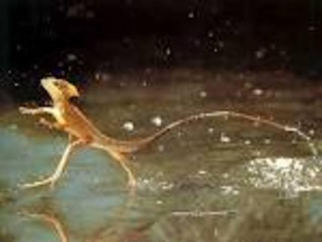 reptiles develop 206mya