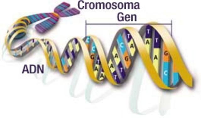 1ª secuencia de un gen humano