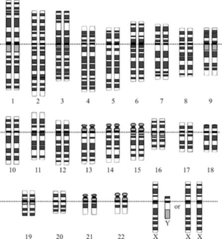 El borrador de la secuencia del genoma humano