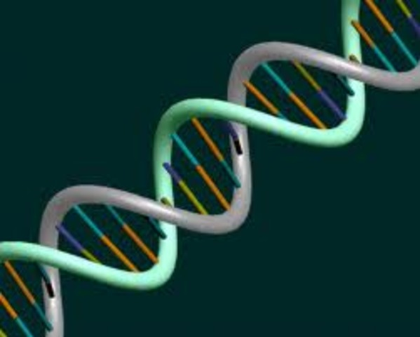 DNA is discovered by watson and crick