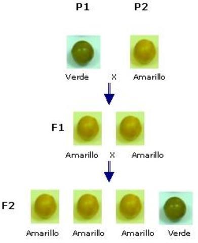factores hereditarios en los genes