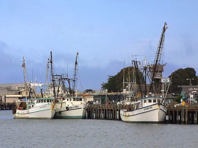 In Catfish Bay