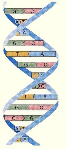 ADN como informacion genética