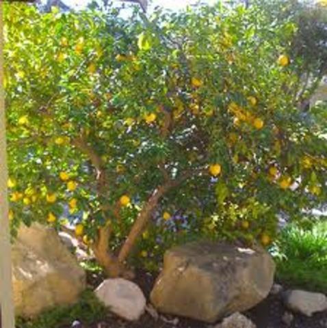 Kurt Lemon gets blown into a tree
