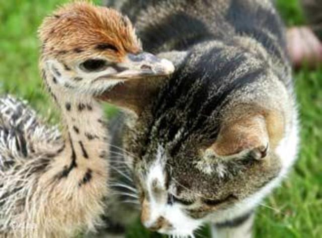 Birds and Mammals spread