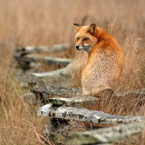 Mammals abundant on land