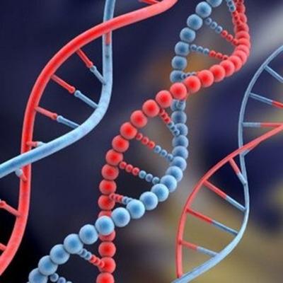 Principales Descubrimientos del ADN timeline