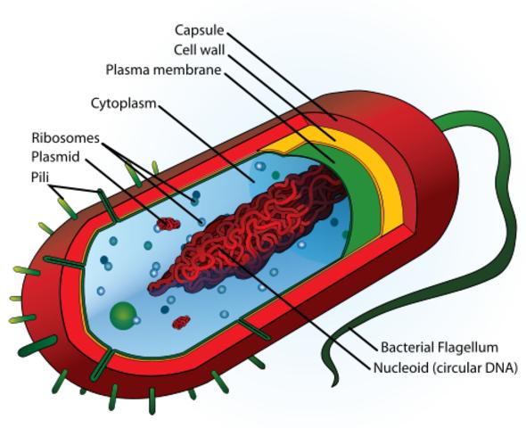 Genoma Eucariota
