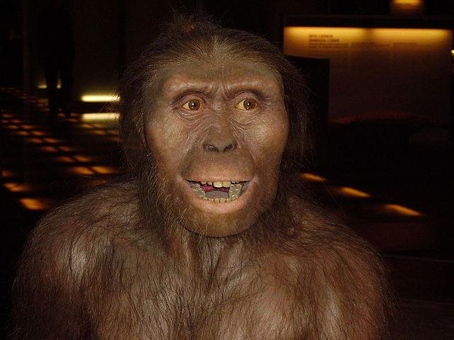 Los australopitecinos