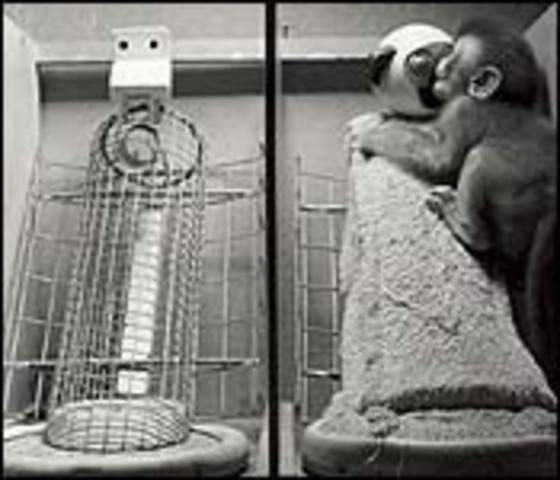 1958 - Harry Harlow publishes The Nature of Love, which describe his experiments with rhesus monkeys on the importance of attachment and love.