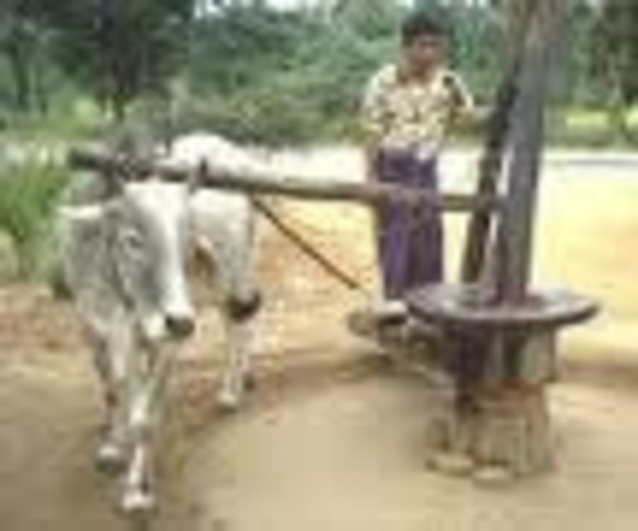 3000 BC. Mules first used for transporting cargo in the Middle East. One of the first energy sources was animal power.