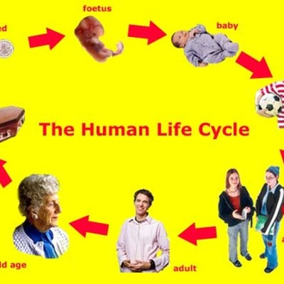 cycle of life timeline