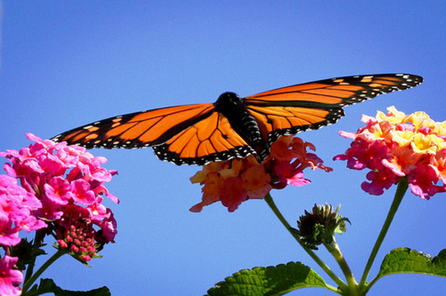 The Butterfly Leaves the Chrysalis