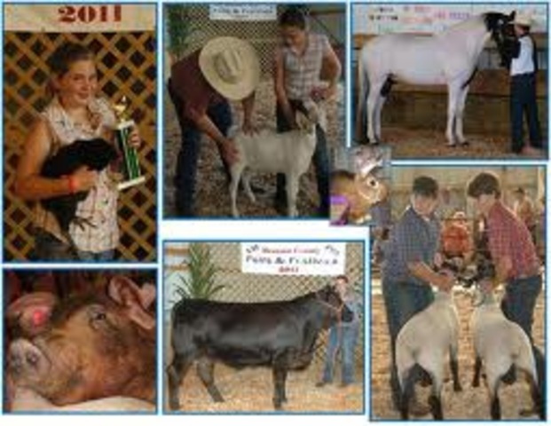 The First Livestock Contest