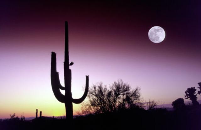 Move #1 to Phoenix, AZ